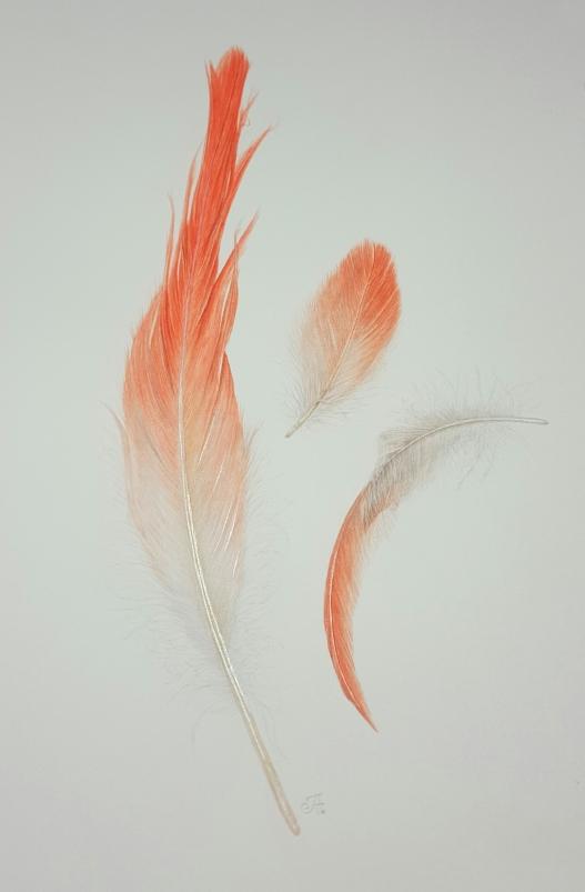 final-flamingo