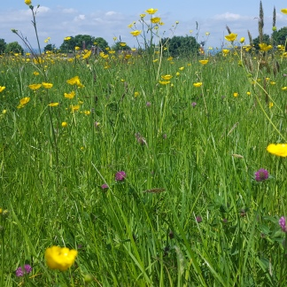 Crantock meadow