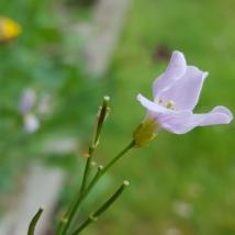 Seedpod forming